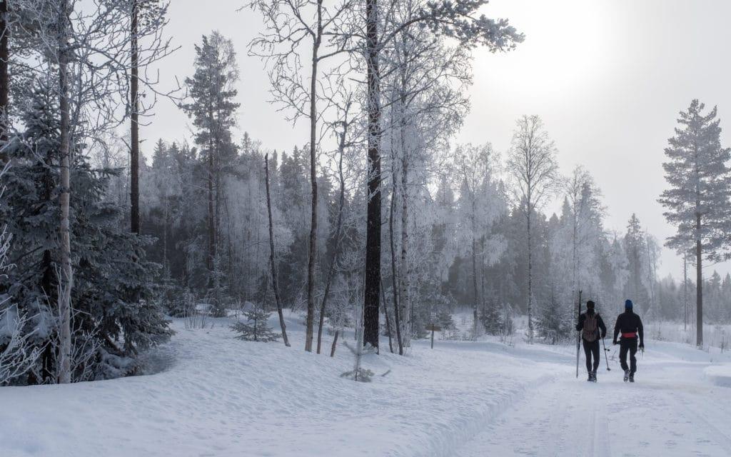 Scandinavian Winter 2